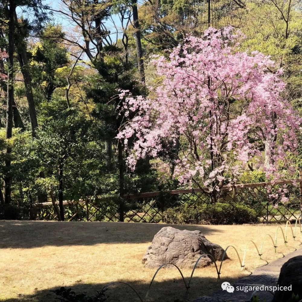 东京散步 | 南青山 & 表参道的日式优雅,你一定会爱上